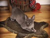 tapis_pour_chats_loyal_luxe_1